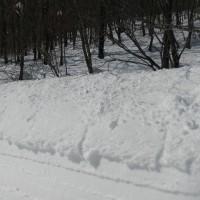 兎和野高原&十石山でスノーシュー