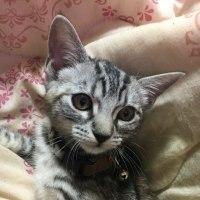 猫ʚ❤︎ɞ可愛い