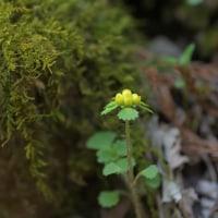 花を求めて山散歩