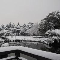 ★あがたの森公園の池の雪景色と白いカモ