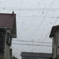 今日も雪の中…