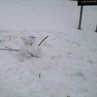 三角山 ホオノキの冬芽