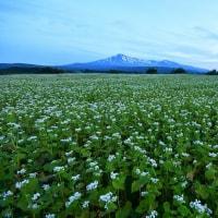 桃野の蕎麦畑