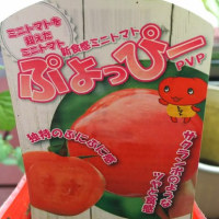 ミニトマト(フラガール/ぷよっぴー)