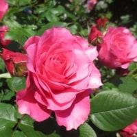 第4回いも子の薔薇塾