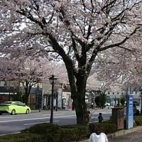 春はいいなぁ~