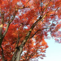 紅葉を求めて奥多摩へ2日目ー1