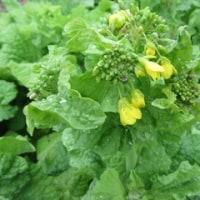 新春の野菜