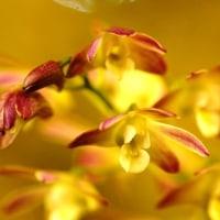蘭 (花 4246)