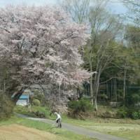 オカリナ喫茶茂木~御前山へ