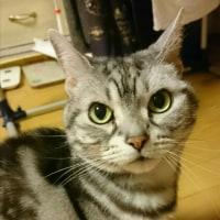 猫ちゃんと腎不全