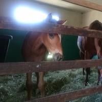 馬産地日高を訪ねて、馬を運ぶ道路について考える