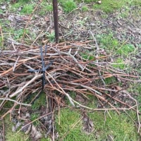 剪定した枝を集めていきます。