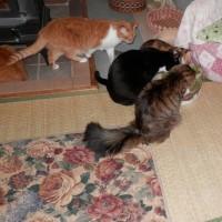 猫達の集まり