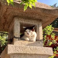 猫ちゃん、お気に入りの場所(^^)