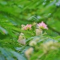 梅雨を彩る花々(赤塚植物園 2017.6.24撮影)