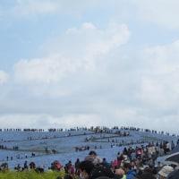 ネモフィラの丘2017