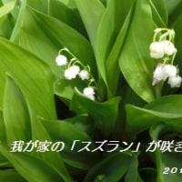 スズランが咲きました・・