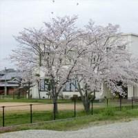 小野店です(^^) 春ですね!!