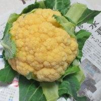 オレンジブーケの収穫です・・・・