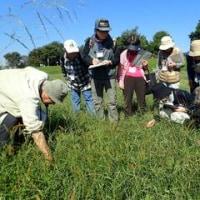 10月の月別イベント「秋の植物観察会」を開催しました!