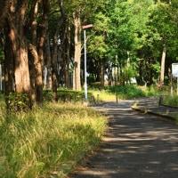 いつもの散歩道・・・(06/23)