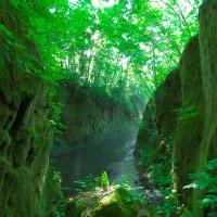 Moss corridor
