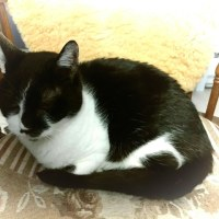 ジト目の兄猫