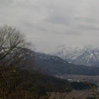 六万騎山はカタクリ満開(その3)
