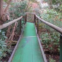 車中泊の旅・・・・七里御浜から浮島の森