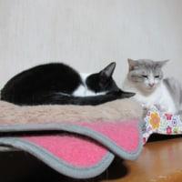 猫と旅券の日