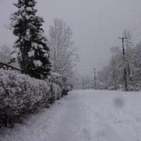 どか雪(?)降ったので