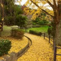 秋の残り。
