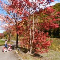 ミニ尾瀨公園散歩