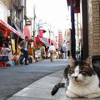 沖縄タウン街・・