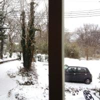 また雪なのでワッフル試作品つくってみた