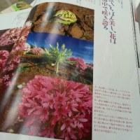2017年2月雑誌