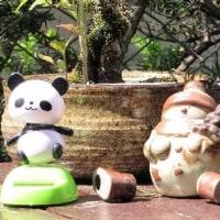 上野動物園でパンダの赤ちゃん