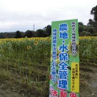 ひまわりの花、花、花 (豊岡市日高町上郷) /但馬情報