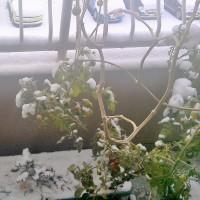 名古屋の初雪