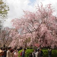 上野公園を散歩