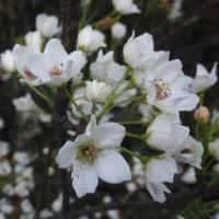 坂城の春2