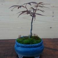 鉢植え 4