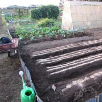 10月24日・葉物野菜を継続して播種しました!