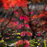師走の彩り#2:京都府立植物園