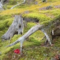 樹木が主役の写真ー21