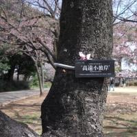 #000 -'17.    新宿御苑(3月25日の散歩)(書きかけです。)