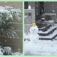 雪が積もって!