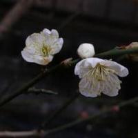 節季は立春に入った