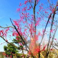 デジブック 『その後の梅は~』